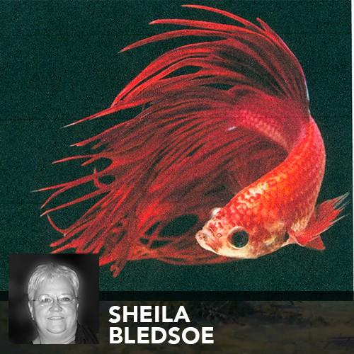 sheila bledsoe